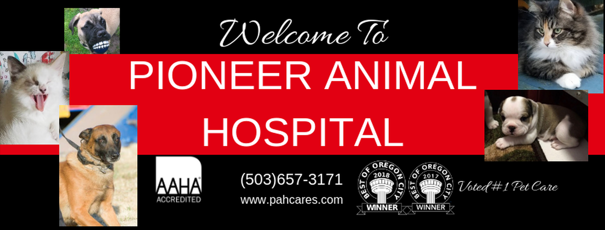 Veterinarian Oregon City, AAHA