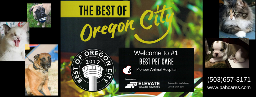 Best Vet Oregon City