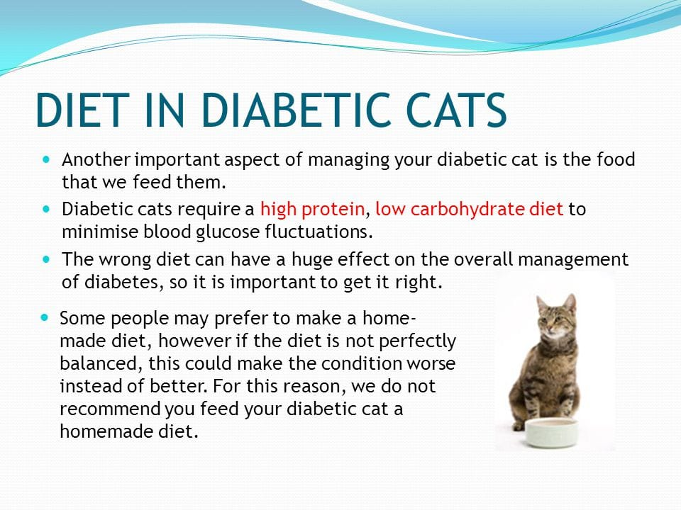 Food for diabetic cat, top veterinarian Oregon City
