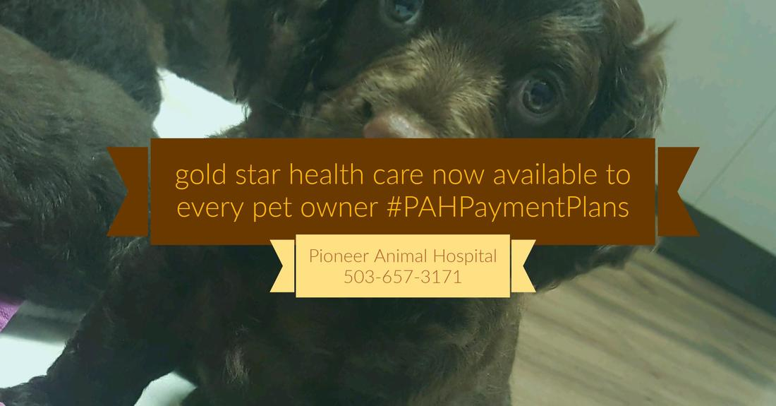 Top 10 Vet Oregon City, #PAHPaymentPlans, Help with vet bill