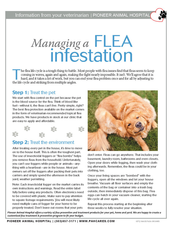 Flea Prevention, Top 10 Vets Oregon City
