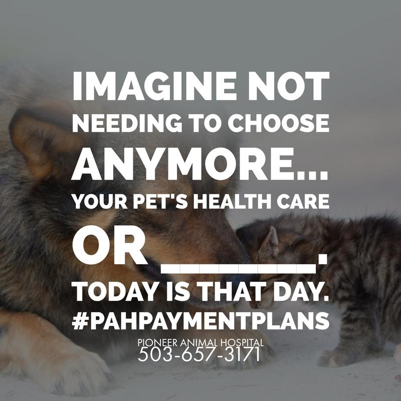 #PAHPaymentPlans, Veterinary Payment Plan
