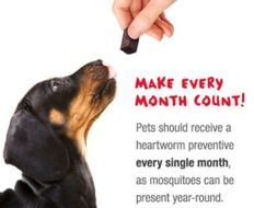 Monthly Heartworm Prevention