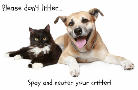 Spay and Neuter Your Pets at Pioneer Animal Clinic, Oregon City